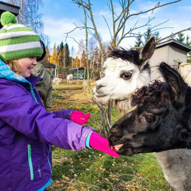 Ферма домашних животных Tahko Farmi
