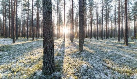 Scandic-Kuopio_suomi-100-juhlaillallinen